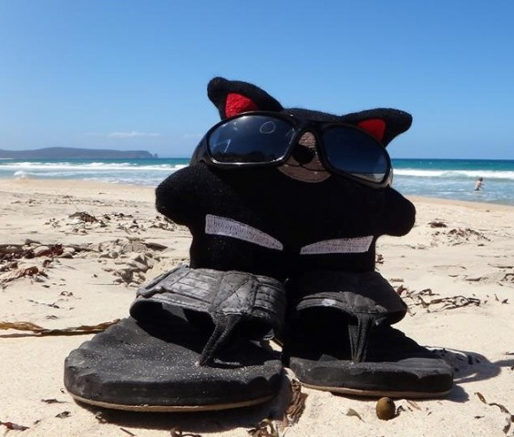 "Envirowoolly ""Tas"" loves a sunny day at the beach"